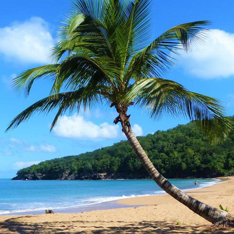 971 : Evadez vous à la plage avec ce sejour 3J/2N en duo • Gite La rose des vents