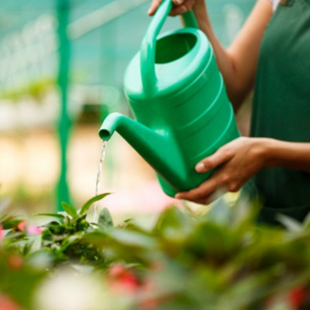 Formation : Jardinage Bio • International Open Academy